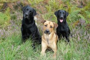 Tika, Abby en Henkie